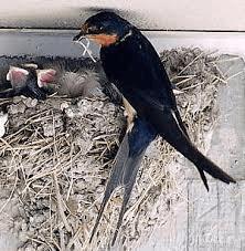 Zwaluwen in het dak, guldens op zak